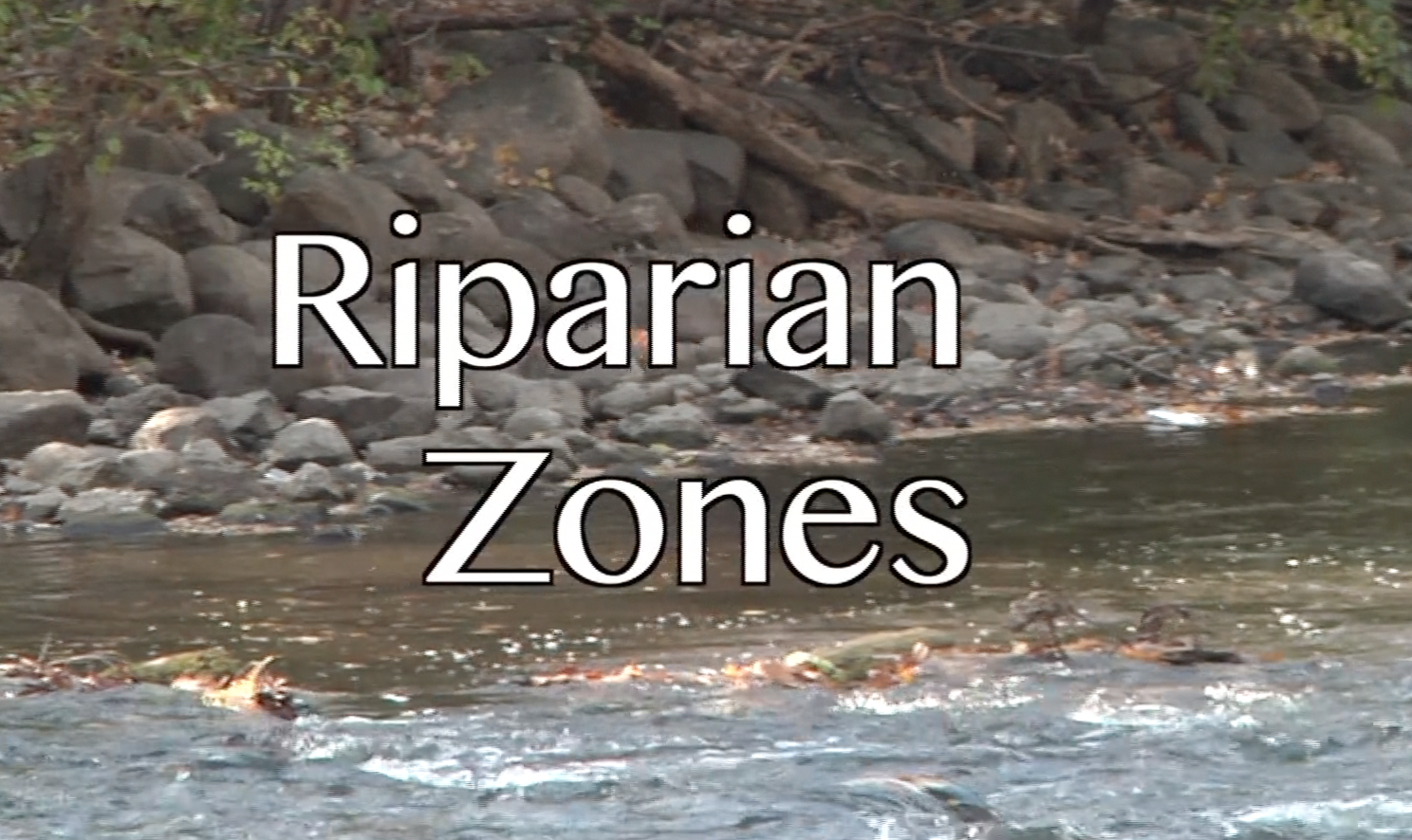 What Are Riparian Zones? The importance  of riverside vegetation.
