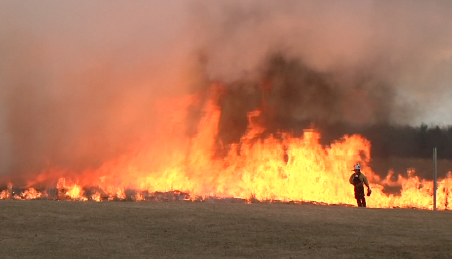 Controlled Burn Restores Natural Habitat
